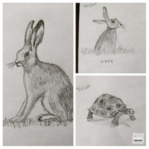 schetsen haas en schildpad