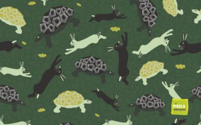 De schildpad en de haas