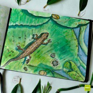 nature journal Watersalamander schets