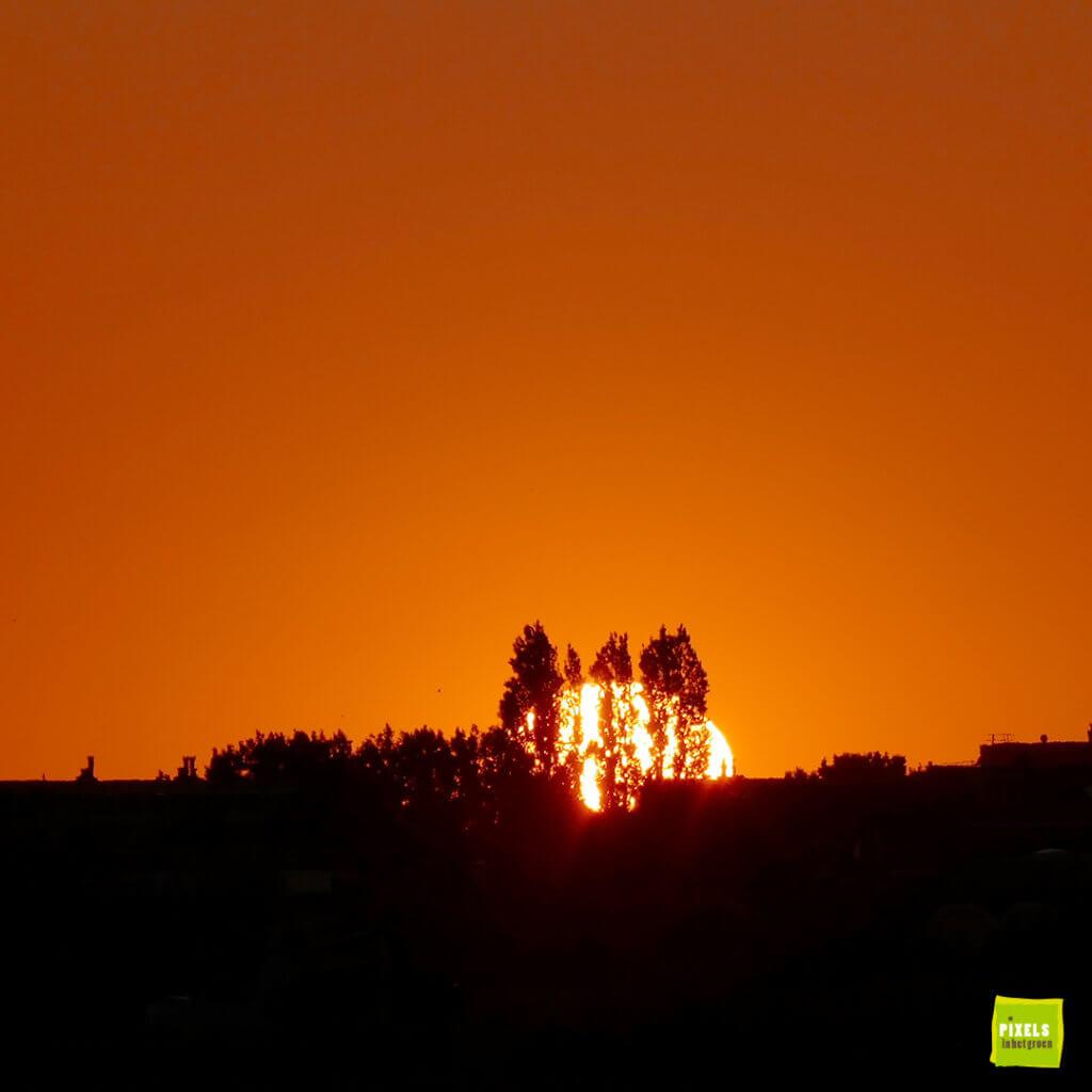 ondergaande zon achter bomen