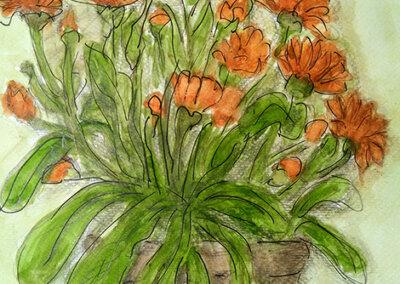 Goudsbloemen in pot