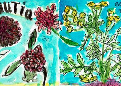 Knautia en Boerenwormkruid