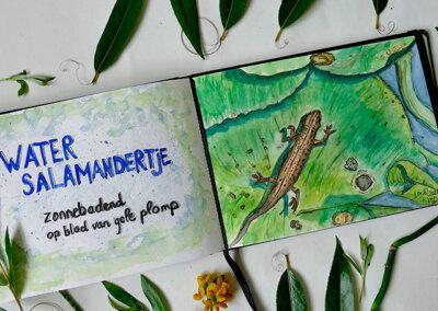 Watersalamandertje