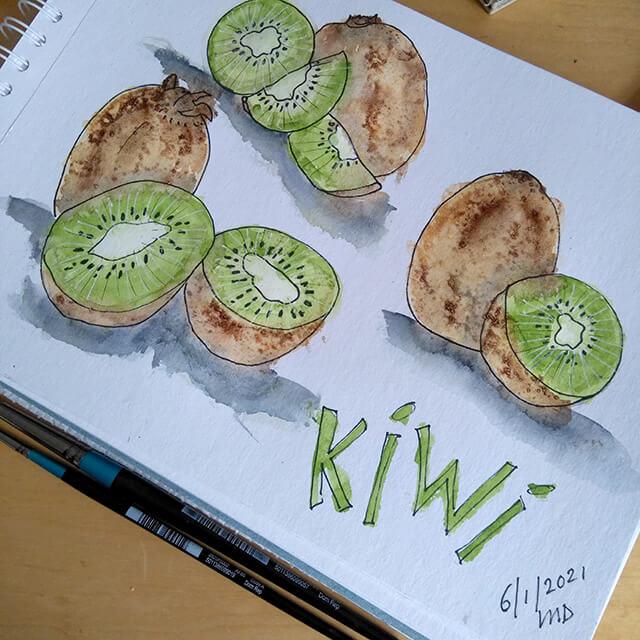 Kiwi's aquarelschets