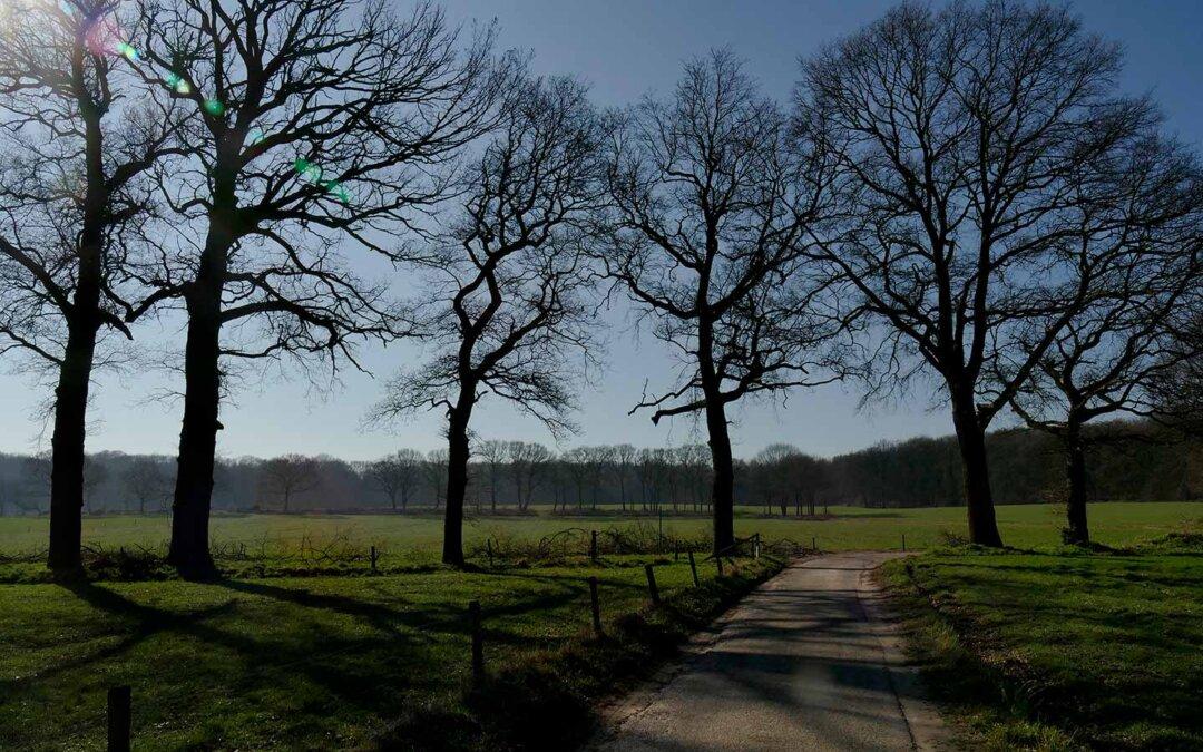 Landschap met bomen en velden